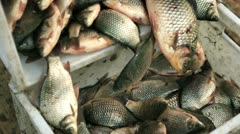 Sales of fresh fish 2 Stock Footage