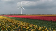 Tulips field with a windmill power station - stock footage