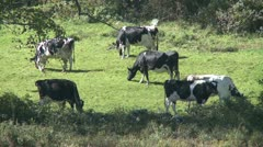 Pasture Grounds (6 of 11) Stock Footage