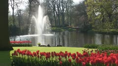 Red tulips and Fountain - stock footage