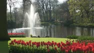 Red tulips and Fountain Stock Footage