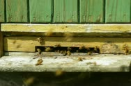Group of honeybees flying into a beehive NTSC Stock Footage