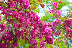 Colors of spring Stock Photos