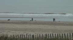 People and dogs walk at the beach Stock Footage