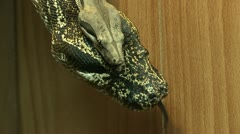 Male and Female Snake - stock footage