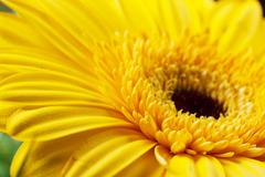 a heart of flower - stock photo