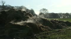 Steaming pile of horse manure Stock Footage