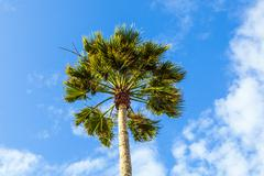 Crown of palm tree Stock Photos