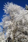 White winter wonderland in the woods Stock Photos