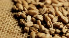 Close up wheat grains Stock Footage