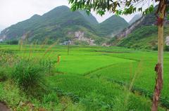 Tea field of Guilin City at south china Stock Photos