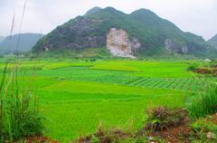 Teetä alalla Guilin City South China Kuvituskuvat