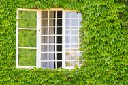 Stock Photo of window surrounded by ivy covered wall