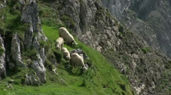 Sheep standing on side of mountain Stock Footage