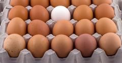 background from eggs. - stock photo