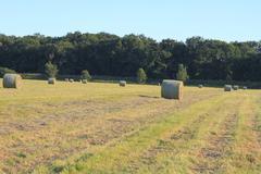 hay bales - stock photo
