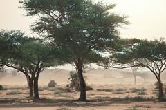 Storm in desert Stock Photos
