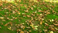 Stock Video Footage of Autumn colors 03