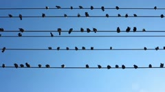 Birds Sitting on Wires Stock Video - stock footage