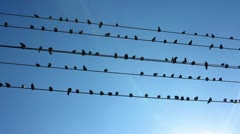 Birds Sitting on Wires Stock Video Stock Footage