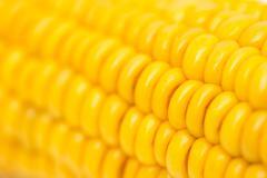 Corn as background. macro Stock Photos