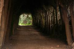 Shady Tree Covered Passage - stock photo