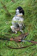 Hunting dog and game Stock Photos