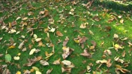 Stock Video Footage of Autumn colors 01