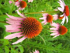 Pink Flower Stock Photos