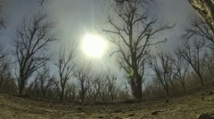 Dusty Desert Pecan Orchard Timelapse Stock Footage
