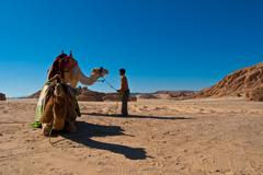 child and camels - stock photo