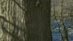 Reveal from tree to river Stock Footage
