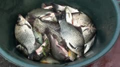 Alive fish in bowl zoom out Stock Footage