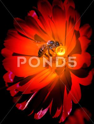 Stock photo of bee on red flower