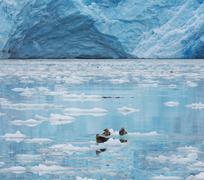 glacier on alaska - stock photo