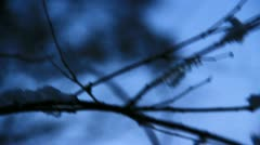 Icicles on the branch in dark forest Stock Footage