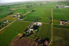 aerial view of green fields - stock illustration