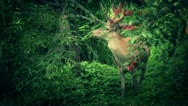 Stag Deer in Forest Setting Looks toward Camera - Slow Motion Stock Footage