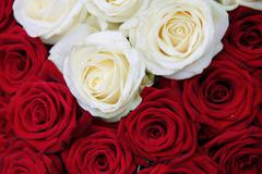 White and red rose valentine's floral arrangement Stock Photos