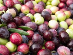 Colorful olives - stock photo