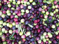 Olives close up Stock Photos