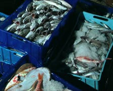Fishing activity in Italy 14 Stock Footage