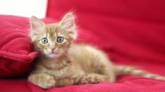 Curious Cute Cat Stock Footage