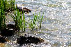 Aquatic plants Stock Photos