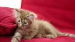 Playful Cute Cat Stock Footage