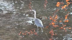 Crane walks slowly at a river Stock Footage
