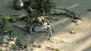 Frog on sand in shadow Stock Footage