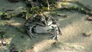 Frog on sand in shadow zoom out Stock Footage