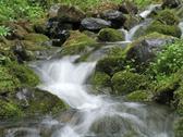 Stock Photo of stream