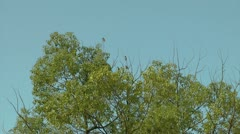 Birds on a branch Stock Footage